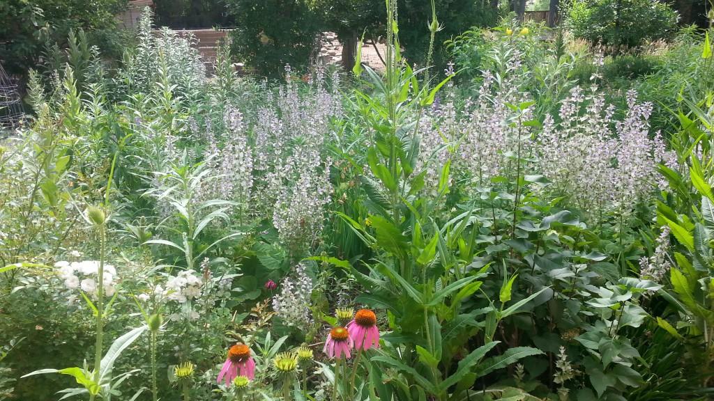 pollinator-garden-1024x576